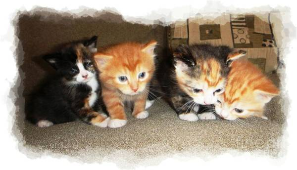 Photograph - Just Kittens by Donna Bentley