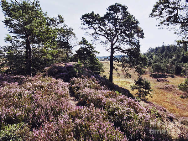 Wall Art - Photograph - Jutlandic Landscape by Wedigo Ferchland