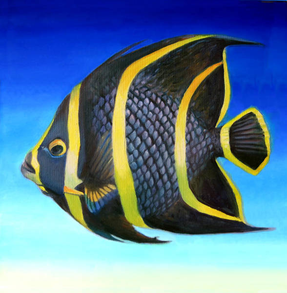 Wall Art - Painting - Juvenile French Angelfish by Nancy Tilles
