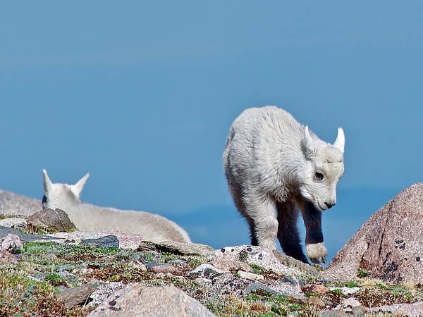 Wildlife Er Photograph - Kids On The Tundra by Stephen  Johnson