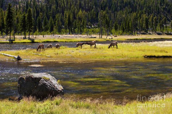 Elk Herd Photograph - Kissing Elk by Keith Kapple