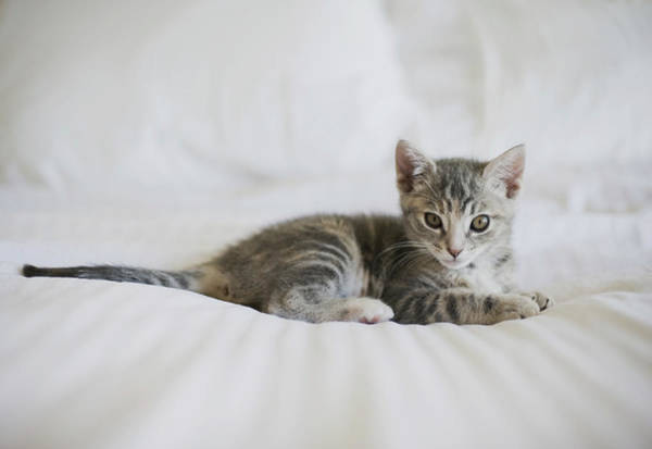 Curiosity Photograph - Kitten by Cindy Loughridge