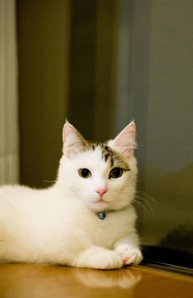 Okayama Prefecture Photograph - Kitten Posing At Camera by Nazra Zahri