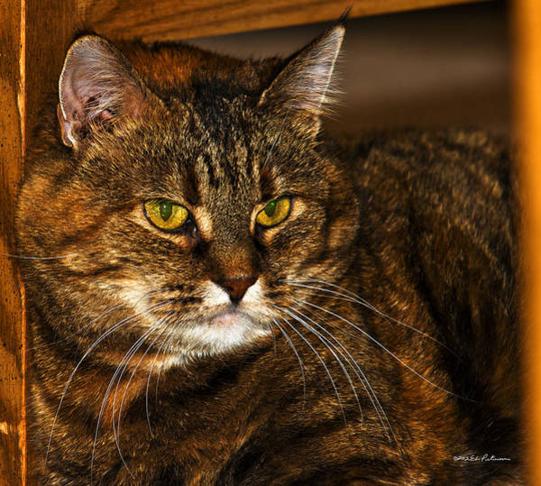 Photograph - Kitty Cat by Edward Peterson