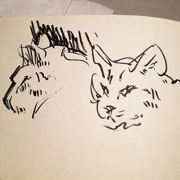 Brush Wall Art - Photograph - #kitty #cats #sketch by Jeff Reinhardt