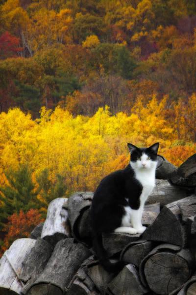 Photograph - Kitty by Shelley Neff