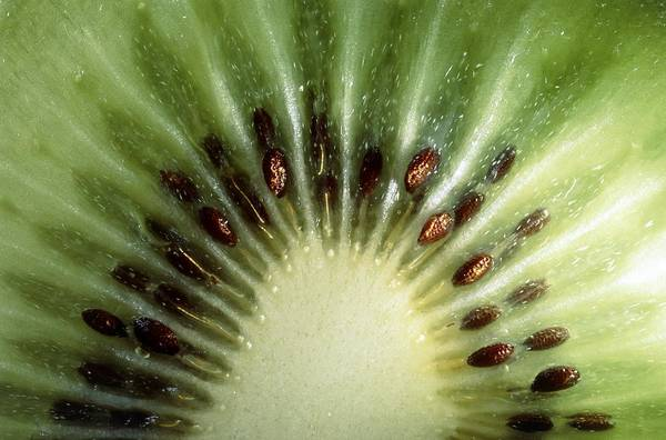 Kiwifruit Photograph - Kiwi Slice by Vaughan Fleming