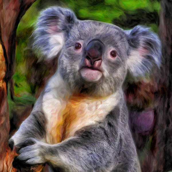 Aborigine Painting - Koala by Dominic Piperata