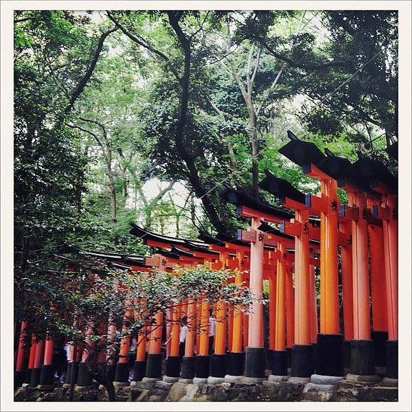 Spiritual Wall Art - Photograph - Kyoto Torii by Marc Gascoigne
