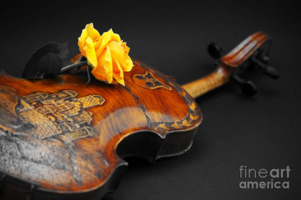 Antic Photograph - La Musica by Angela Doelling AD DESIGN Photo and PhotoArt