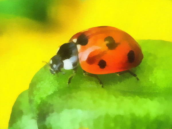 Digitalart Painting - Ladybird by Odon Czintos