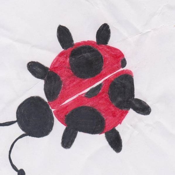 Lady Bug Drawing - Ladybug by Kaily