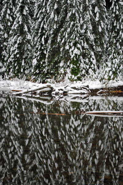 Wall Art - Photograph - Lake 22 Reflection Of Pines by Twenty Two North Photography