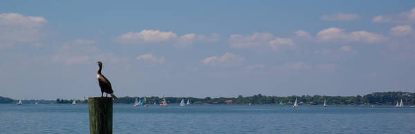 Photograph - Lake Dora Afternoon by Kathi Shotwell