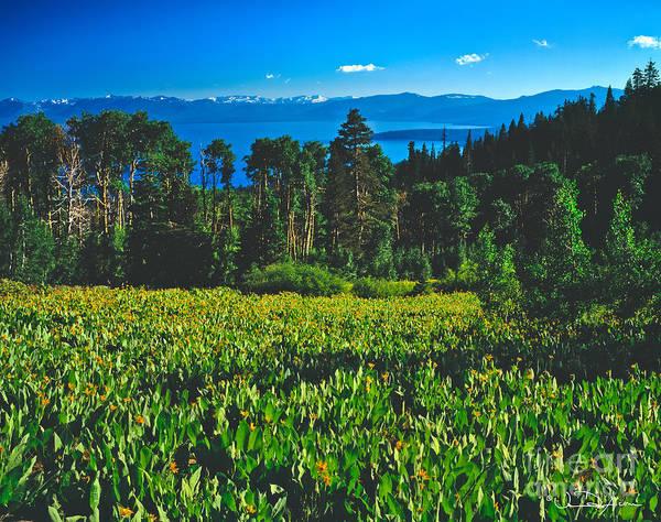 Wall Art - Photograph - Lake Tahoe Mule Ears Field by Vance Fox