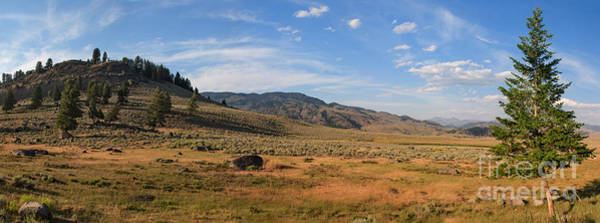 Photograph - Lamar Valley -- Lone Tree Panorama by Charles Kozierok