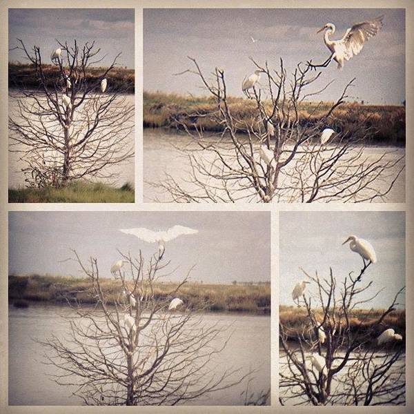 Egret Photograph - Landing Sequence by Tim Paul