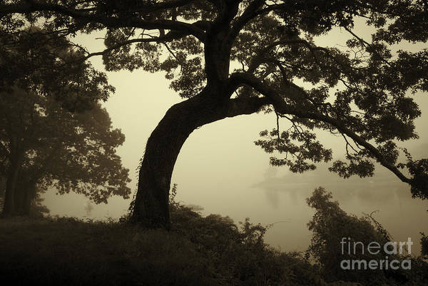 Photograph - Landscape With Tree And Fog by David Gordon