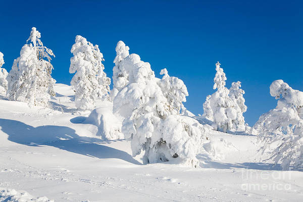 Wall Art - Photograph - Lapland Finland by Kati Finell