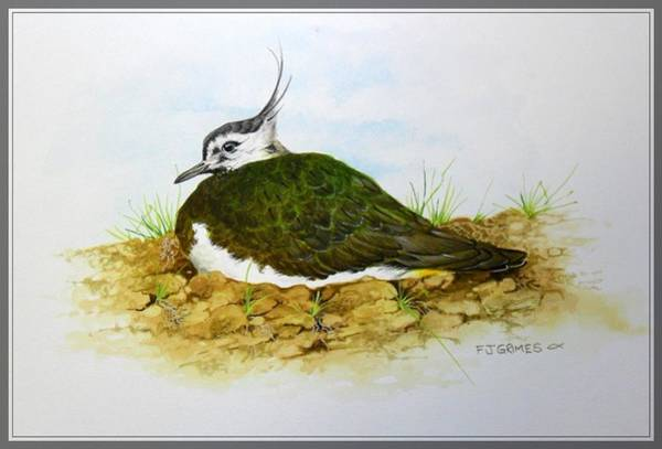 Lapwing Painting - Lapwing by Frederick Grimes