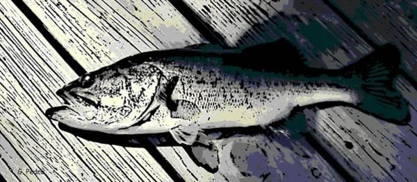 Angling Art Photograph - Largemouth Bass by George Pedro