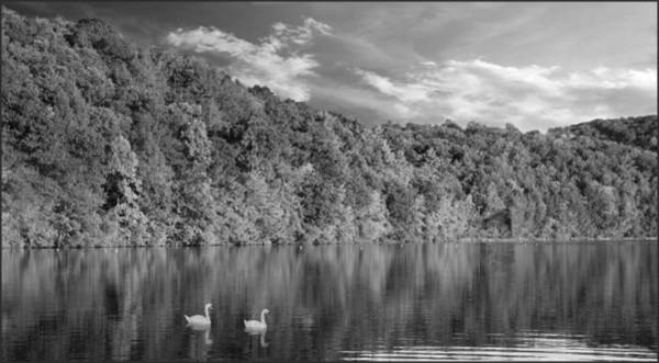 Photograph - Late Afternoon At The Lake - Bw by David Dehner