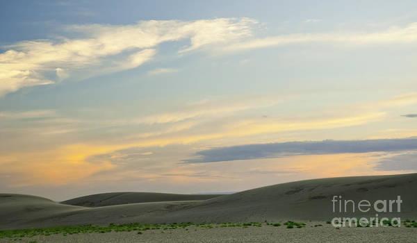 Photograph - Late Colorado Sun by David Waldrop
