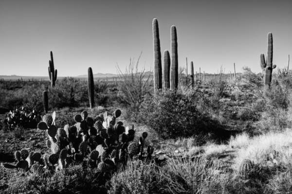 Late Wall Art - Photograph - Late Winter Desert by Chad Dutson