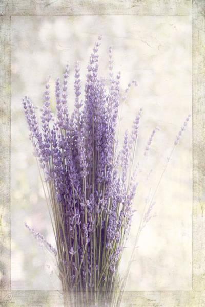 Wall Art - Digital Art - Lavender Bunch by Margaret Hormann Bfa