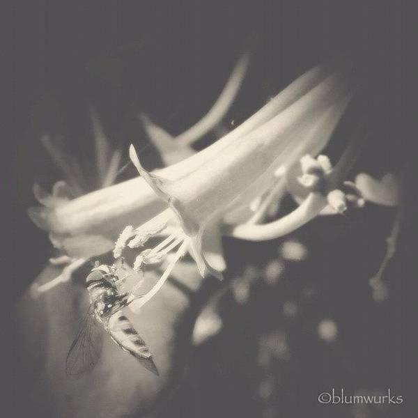Macro Photograph - Laws Of Nature by Matthew Blum
