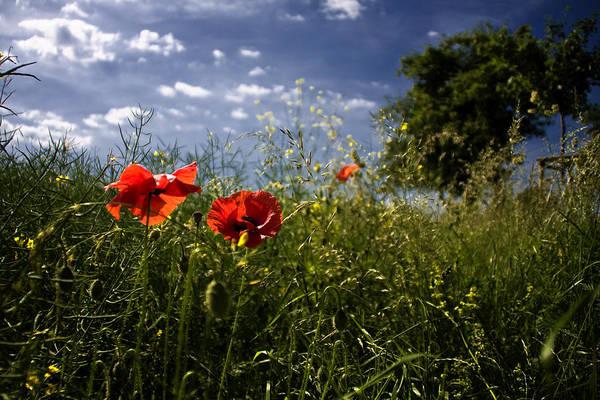 Blume Photograph - Le Champ De L'amour by Falko Follert