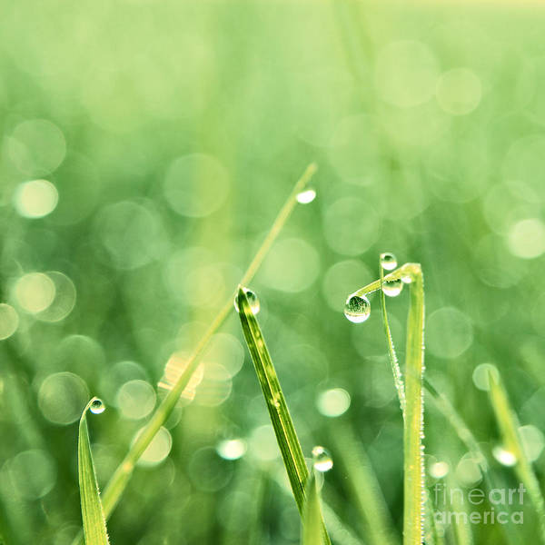 Green Grass Photograph - Le Reveil - S02b3 by Variance Collections