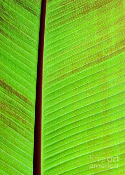 Photograph - Leaf Abstract by Sabrina L Ryan