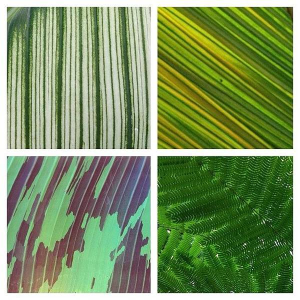 Abstract Flowers Wall Art - Photograph - leaf collage II by Travel Designed