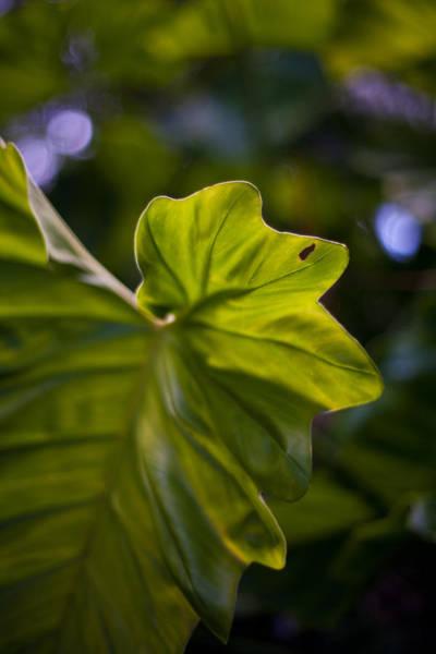 Wall Art - Photograph - Leaf Edge by Mike Reid