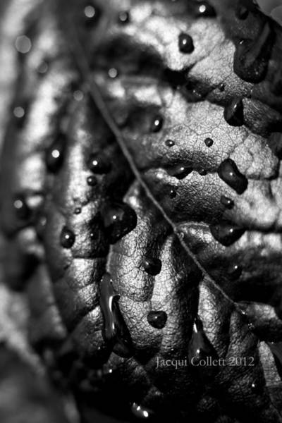 Photograph - Leaf by Jacqui Collett