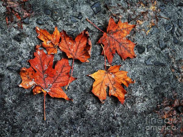 Photograph - Leaf Litter Photograph by Kristen Fox