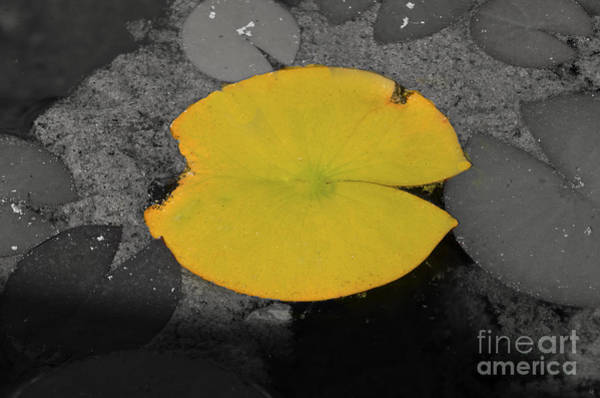 Photograph - Leaf On A Pond II by Donna Greene