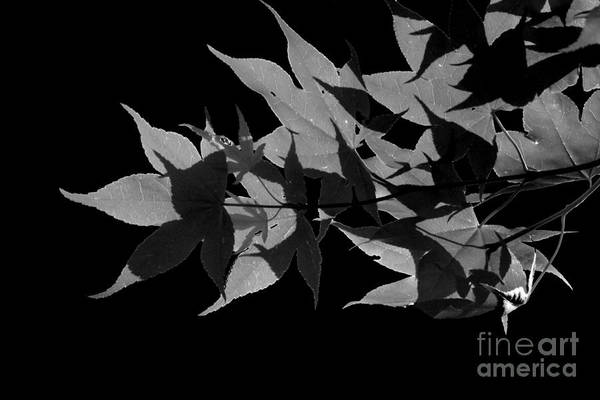 Photograph - Leaf Shadows by Heather Applegate