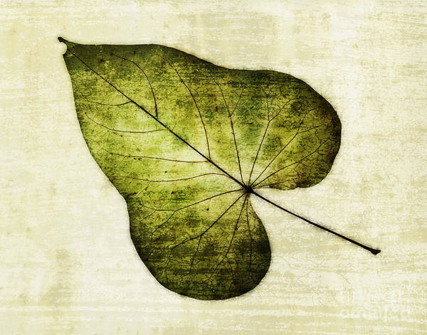 Photograph - Leaf Texture Overlay by David Waldrop