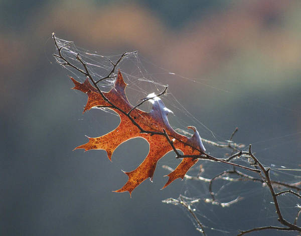 Photograph - Leaf With Web by Frank Winters