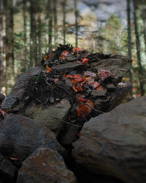 Dinosaurs Photograph - Leafasaurus by Susan Capuano