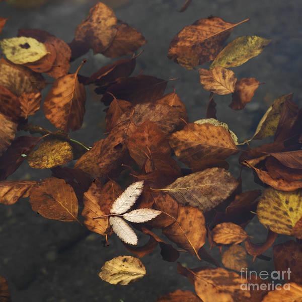 Fallen Leaf Lake Photograph - Leaves In A Lake by Bernard Jaubert