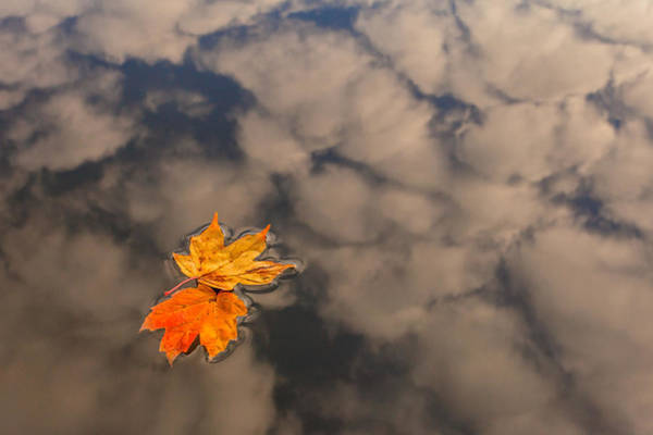 Photograph - Leaves In Water by Keith Allen