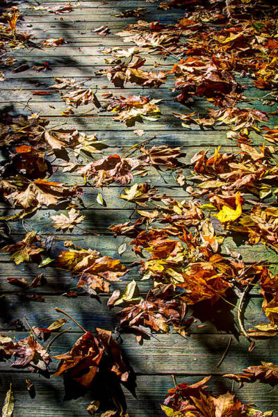 Photograph - Leaves On The Boardwalk by David Patterson