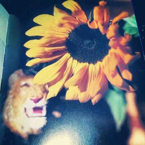 Wall Art - Photograph - #leo The #lion #august #summer by Gina Marie
