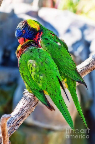 Rainbow Lorikeet Photograph - Let Me Get That For You by Eddie Yerkish
