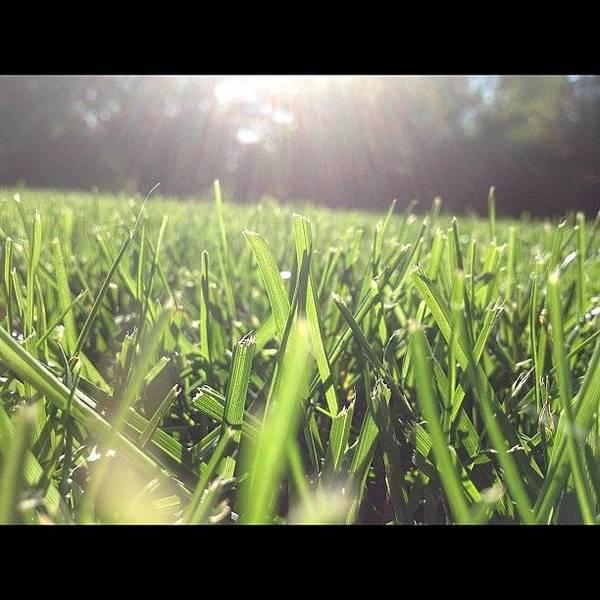 Martini Wall Art - Photograph - Let Yourself Shine #grass#green#sunshine by Ally De Martini