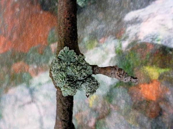 Photograph - Lichen On Stick by Beth Akerman