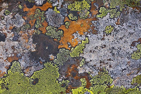Orange Lichen Photograph - Lichen Pattern Series - 15 by Heiko Koehrer-Wagner